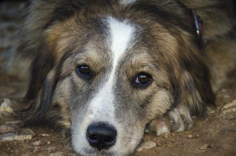 dog-430234_960_720